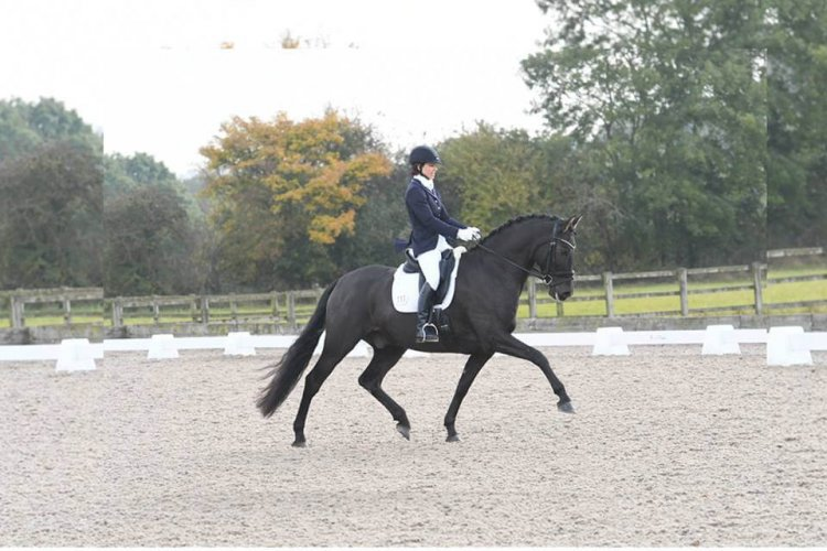 Advanced Dressage rider Holly Norris : Adding Expression to the Trot