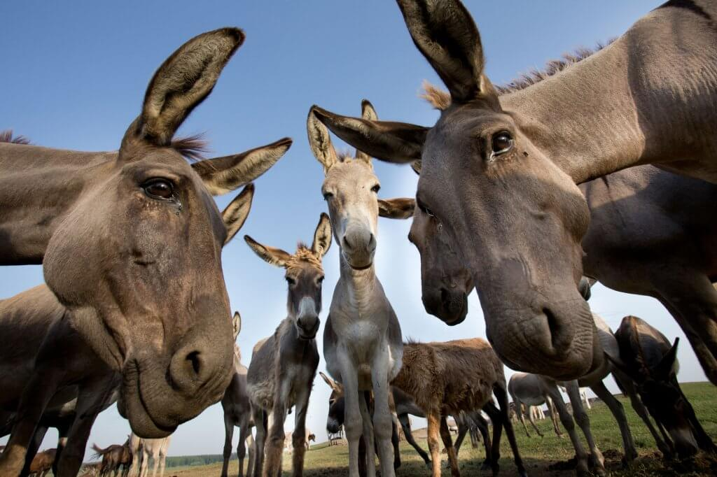 A traditionally held belief is that horses and donkeys cannot safely live together, but is it true?