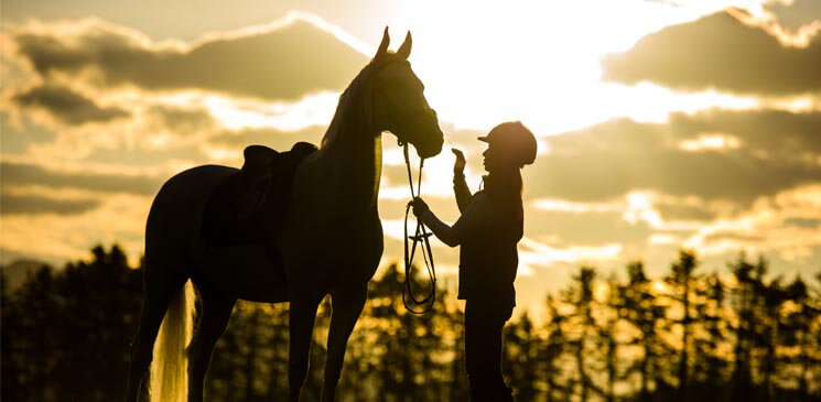 Do increasing premiums make you question the need for horse insurance?