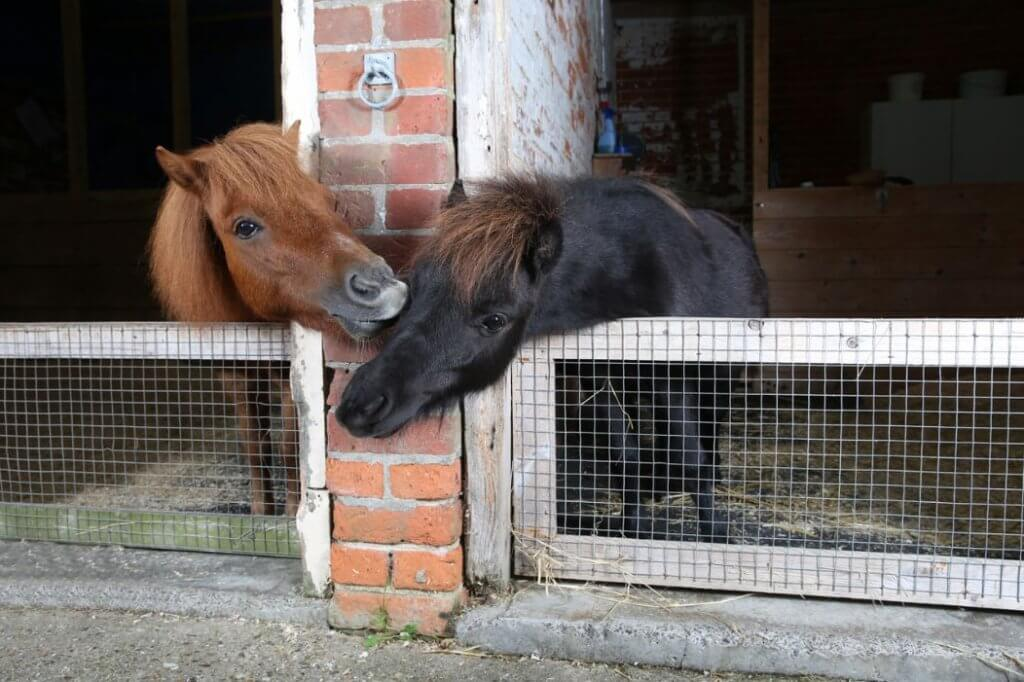 New equine bereavement support course to help owners deal with loss and grief