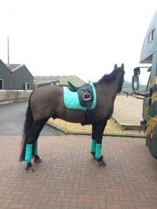 Horse in carpark