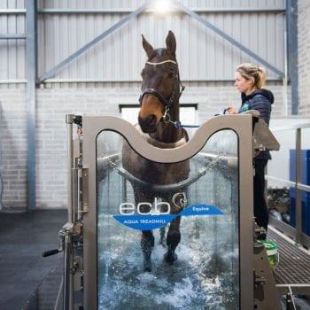 Equine Water treadmill